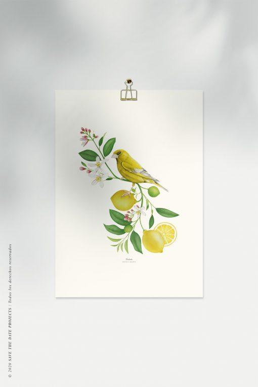 lamina botanica en acuarela con PAJARO verderon
