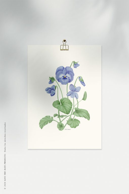 lamina de violeta en acuarela botanica
