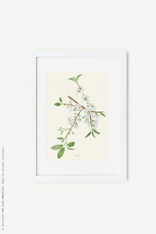 marco blanco cuadro cerezo
