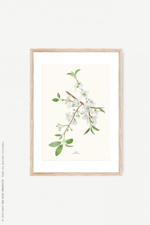 cuadro de madera cerezo botánico
