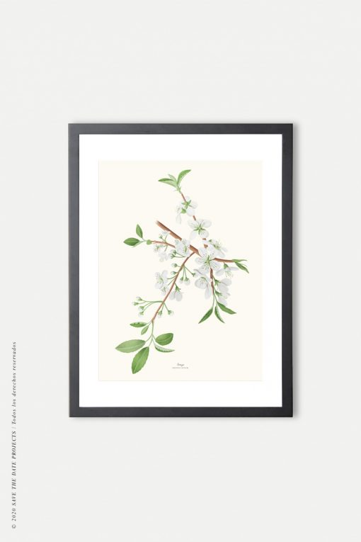 marco negro ilustración vintage cerezo