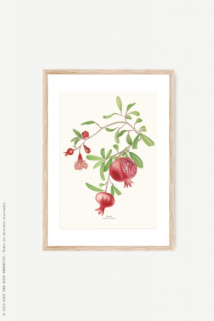 Dibujo de fruta de granada en acuarela