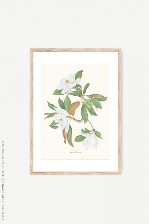 magnolio acuarela póster