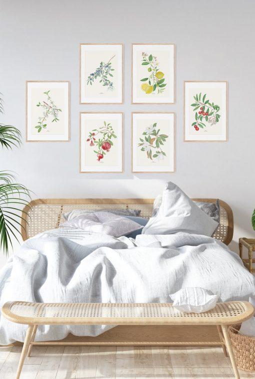 laminas botanicas en acuarela con frutos COLECCION habitacion