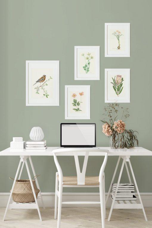 mural de cuadros con aves y vegetacion y flores pajaro pinzon