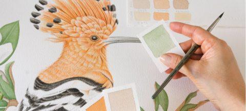 ilustración pajaro acuarela abubilla
