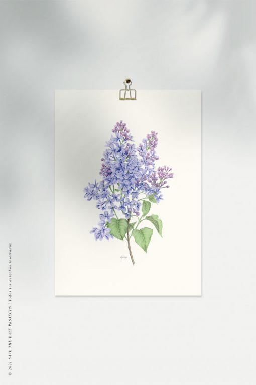 lamina-botanica-en-acuarela-flor-LILA