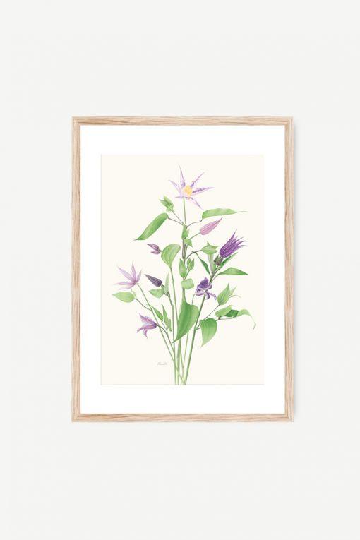 dibujo acuarela flor pared clematis