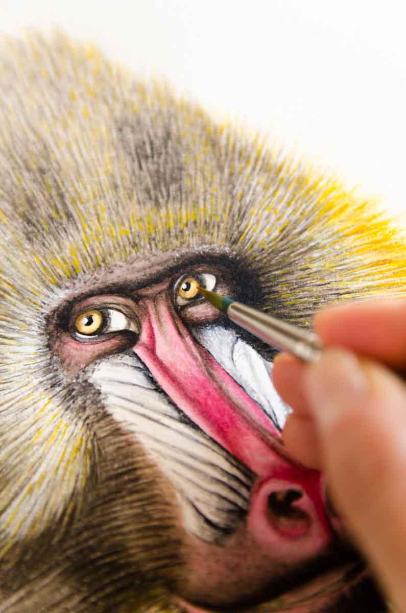 Detalle cara babuino acuarela Kata Zapata