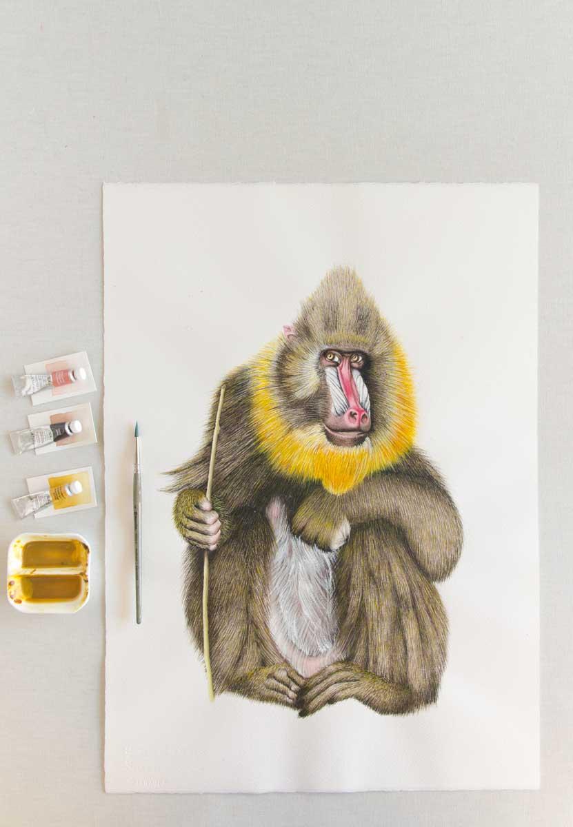 Ilustracion babuino acuarela Save the date projects