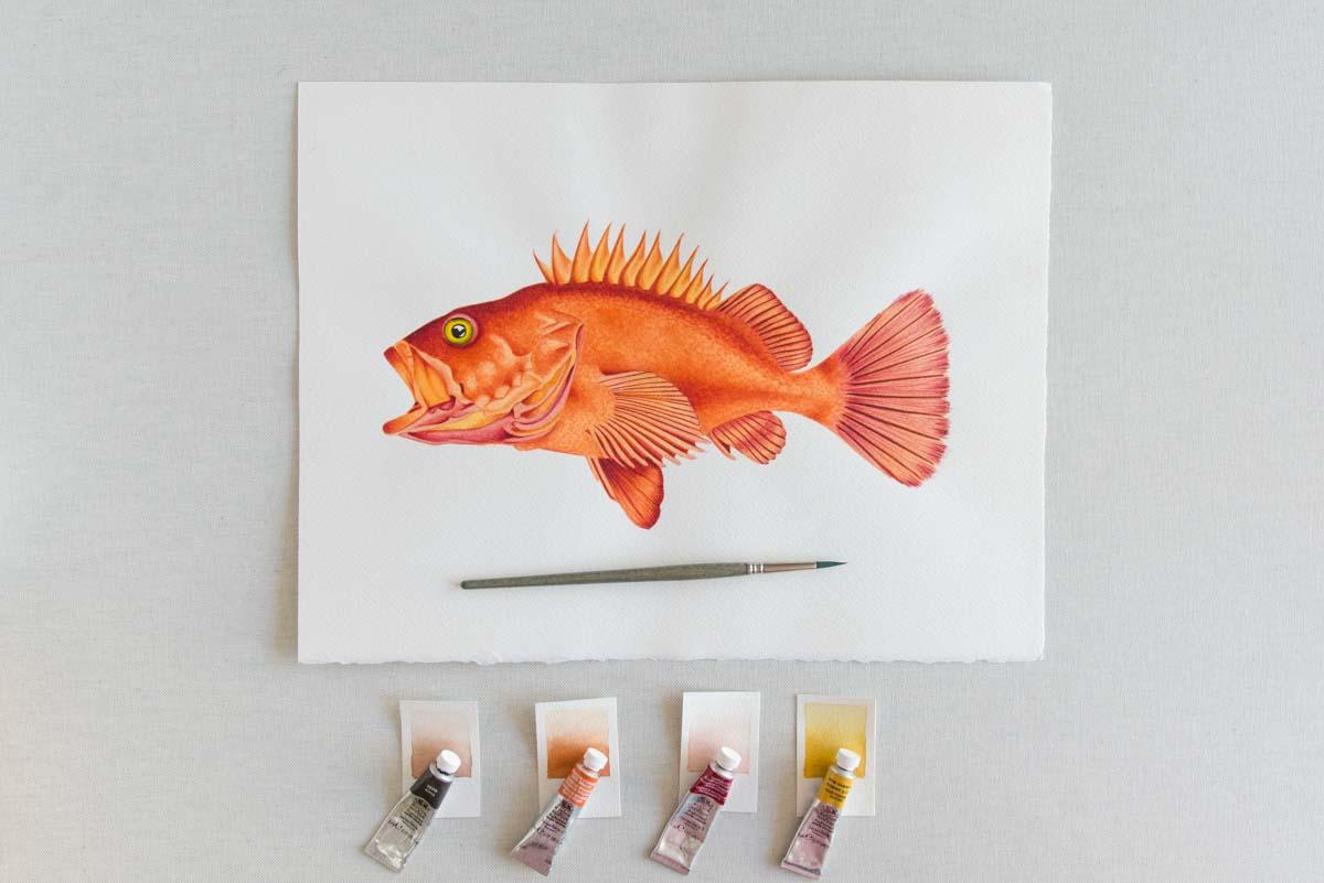ilustracion para empresas pez